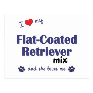 I Love My Flat-Coated Retriever Mix (Female Dog) Postcard