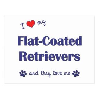 I Love My Flat-Coated Retrievers (Multiple Dogs) Postcard