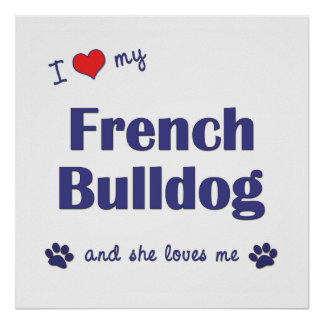 I Love My French Bulldog (Female Dog) Poster