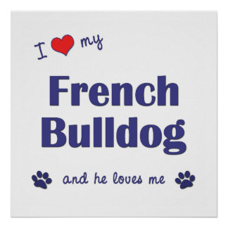 I Love My French Bulldog (Male Dog) Poster