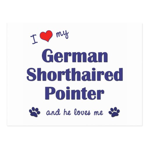 I Love My German Shorthaired Pointer (Male Dog) Post Cards