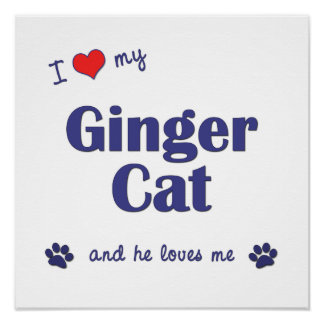 I Love My Ginger Cat (Male Cat) Poster