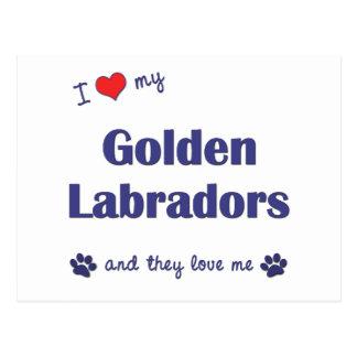 I Love My Golden Labradors (Multiple Dogs) Postcard