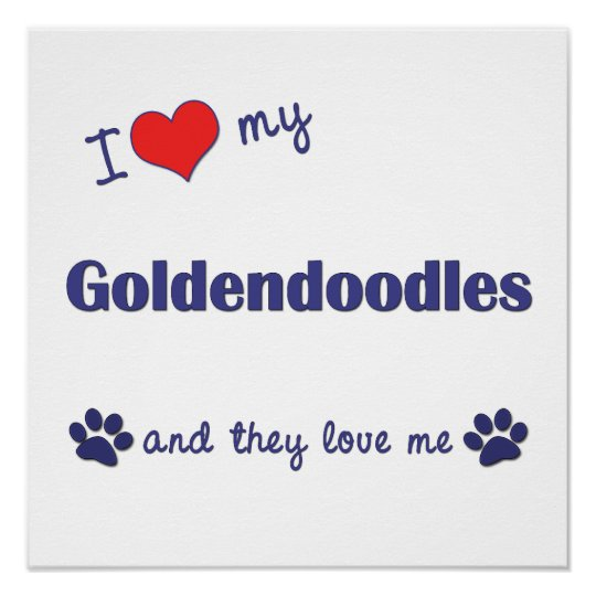 I Love My Goldendoodles (Multi Dogs) Poster Print