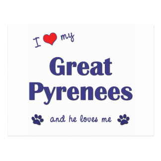 I Love My Great Pyrenees (Male Dog) Postcard