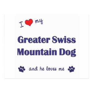 I Love My Greater Swiss Mountain Dog (Male Dog) Postcard