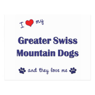 I Love My Greater Swiss Mountain Dogs (Multi Dogs) Postcard