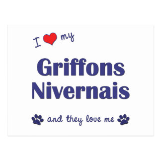 I Love My Griffons Nivernais (Multiple Dogs) Postcard