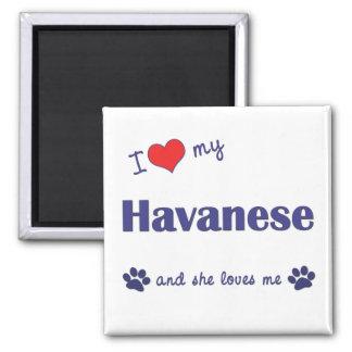 I Love My Havanese Female Dog Refrigerator Magnets