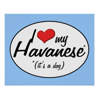 I Love My Havanese It s a Dog Poster