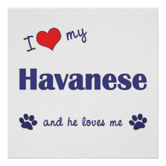 I Love My Havanese Male Dog Poster
