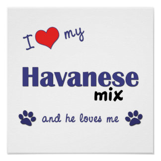 I Love My Havanese Mix Male Dog Poster Print