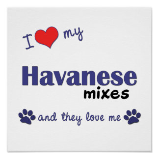 I Love My Havanese Mixes Multi Dogs Poster Print