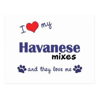 I Love My Havanese Mixes (Multiple Dogs) Postcard