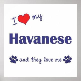 I Love My Havanese (Multiple Dogs) Poster
