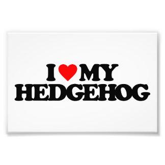 I LOVE MY HEDGEHOG PHOTOGRAPH