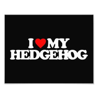 I LOVE MY HEDGEHOG ART PHOTO