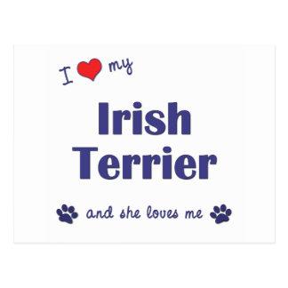 I Love My Irish Terrier (Female Dog) Postcard