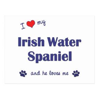 I Love My Irish Water Spaniel (Male Dog) Postcard