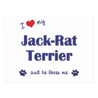 I Love My Jack-Rat Terrier (Male Dog) Postcard