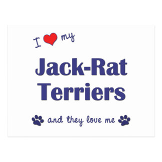 I Love My Jack-Rat Terriers (Multiple Dogs) Postcard