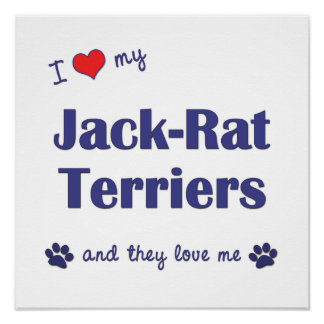 I Love My Jack-Rat Terriers (Multiple Dogs) Poster