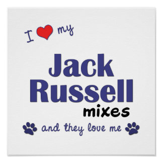 I Love My Jack Russell Mixes (Multi Dogs) Poster