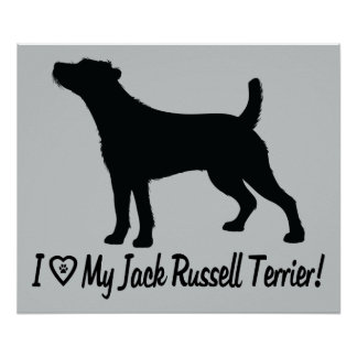 I Love My Jack Russell Rough Coat in Silhouette Poster