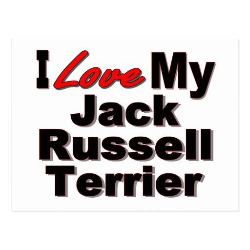 I Love My Jack Russell Terrier Dog Gifts Postcard