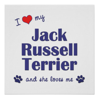 I Love My Jack Russell Terrier (Female Dog) Poster