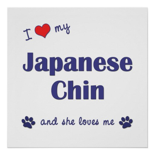 I Love My Japanese Chin (Female Dog) Posters