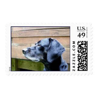 I Love My Lab Stamp
