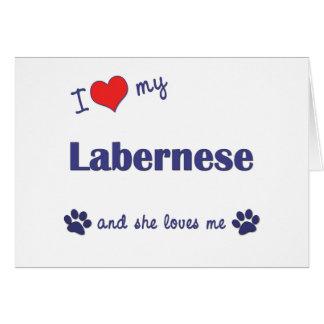 I Love My Labernese (Female Dog) Greeting Card
