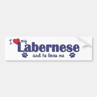 I Love My Labernese (Male Dog) Bumper Sticker