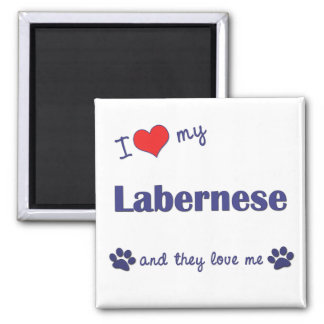 I Love My Labernese (Multiple Dogs) 2 Inch Square Magnet