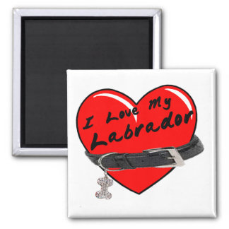 I Love My Labrador Heart with Dog Collar 2 Inch Square Magnet