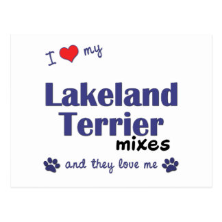 I Love My Lakeland Terrier Mixes (Multiple Dogs) Postcard