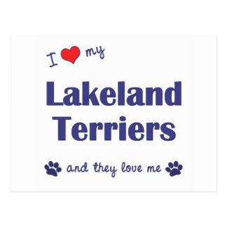 I Love My Lakeland Terriers (Multiple Dogs) Postcard