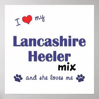 I Love My Lancashire Heeler Mix (She) Poster Print