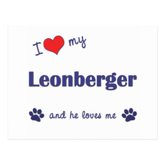 I Love My Leonberger (Male Dog) Postcard