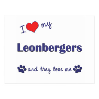 I Love My Leonbergers (Multiple Dogs) Postcard
