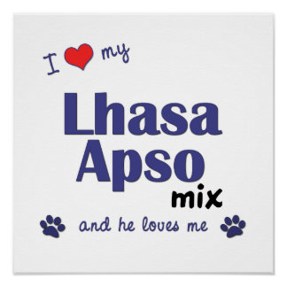 I Love My Lhasa Apso Mix (Male Dog) Poster Print