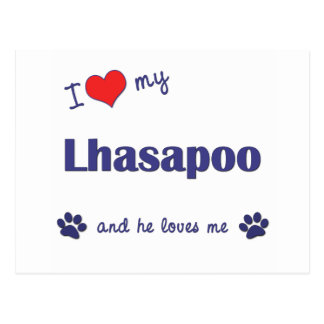 I Love My Lhasapoo (Male Dog) Postcard