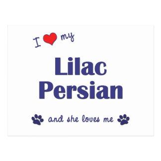 I Love My Lilac Persian (Female Cat) Postcard