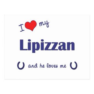 I Love My Lipizzan (Male Horse) Postcard