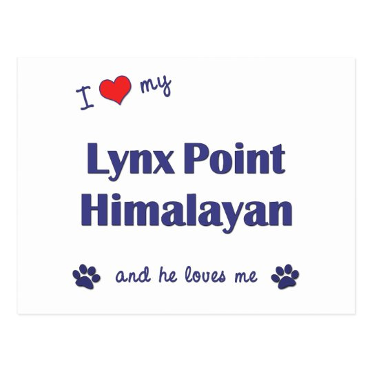 I Love My Lynx Point Himalayan (Male Cat) Postcard