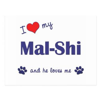 I Love My Mal-Shi (Male Dog) Postcard