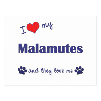 I Love My Malamutes (Multiple Dogs) Postcard