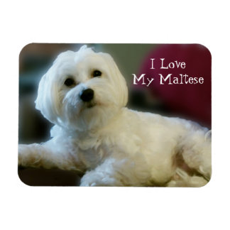 I Love My Maltese Magnet