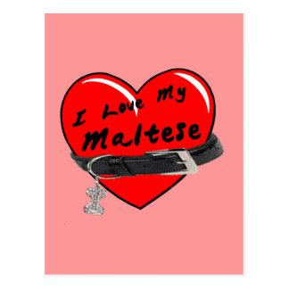 I Love My Maltese Red Heart with Dog Collar Postcard